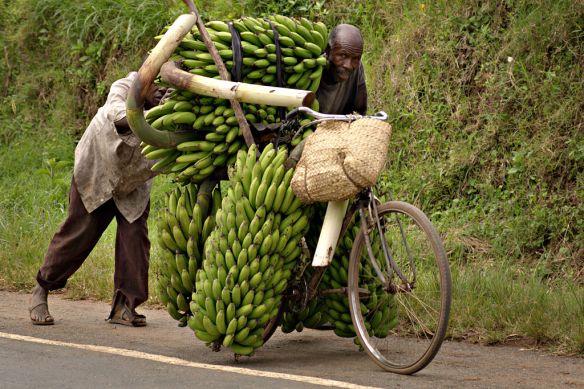 Banana-bike-wiki
